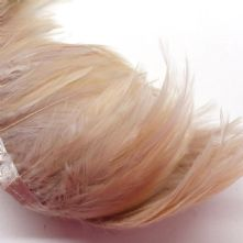 Beige Full Hackle Feather
